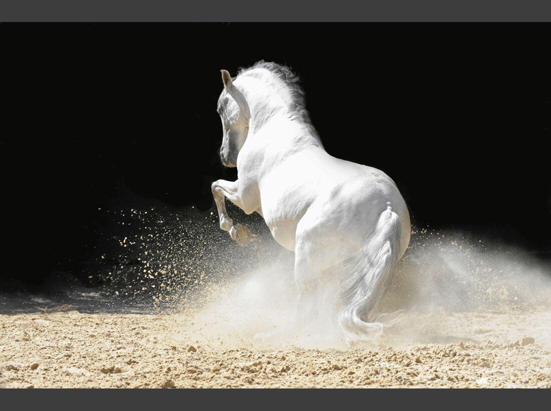 cav-pferde-fotografieren-2-lir5838-1 (jpg)