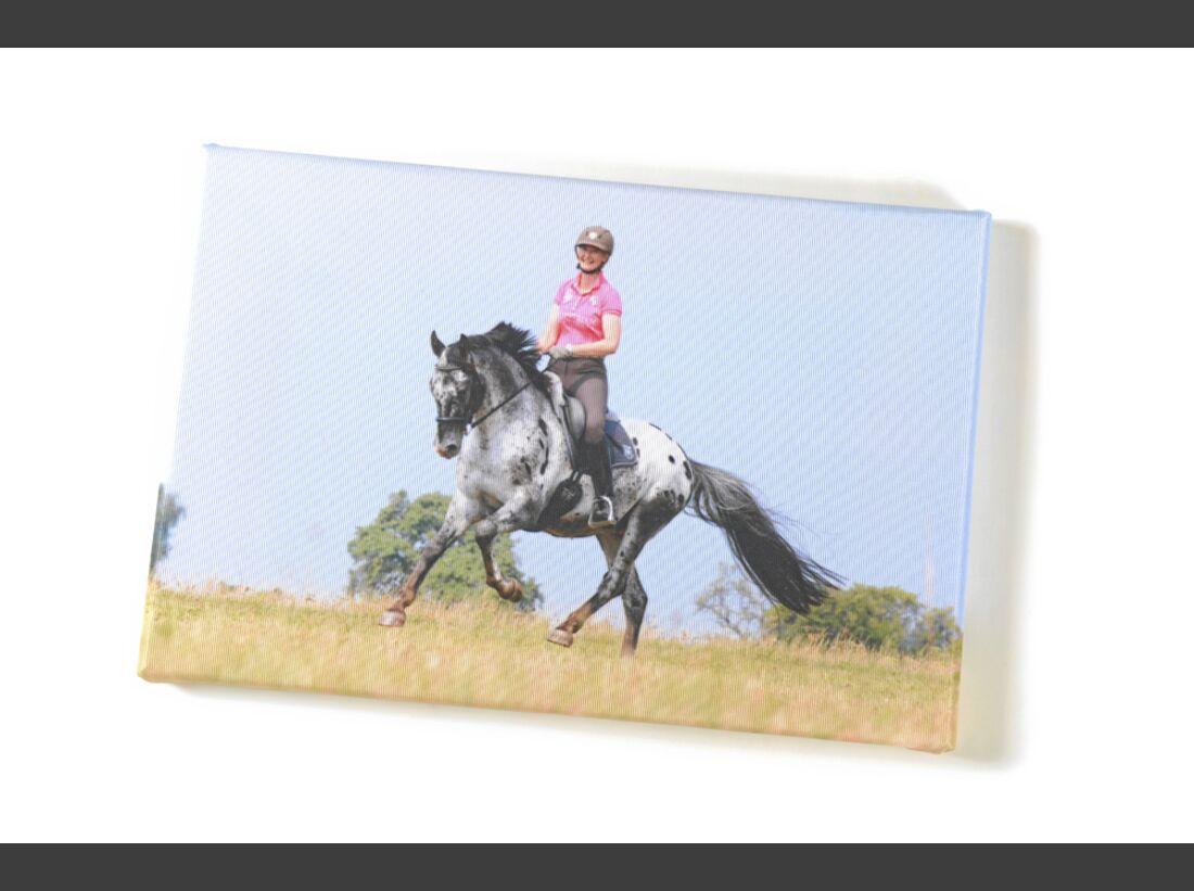 cav-pferde-fotografieren-3-dsc4934-raedlein (jpg)