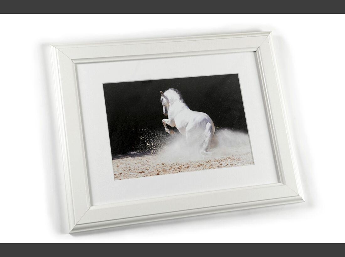 cav-pferde-fotografieren-3-dsc4957-raedlein (jpg)