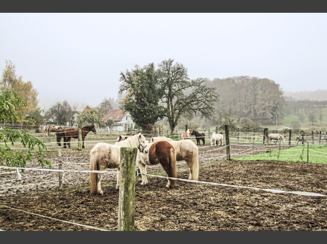 cav-reitschultest-freiburg-022017-alt-vogtshof-winterkoppeln-floesser (jpg)